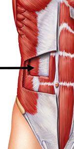 exercices abdominaux transverses