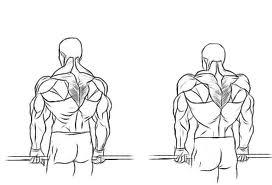 muscler dos haltères