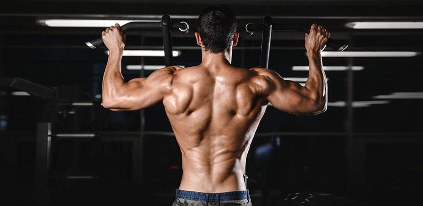musculation dos sans matériel
