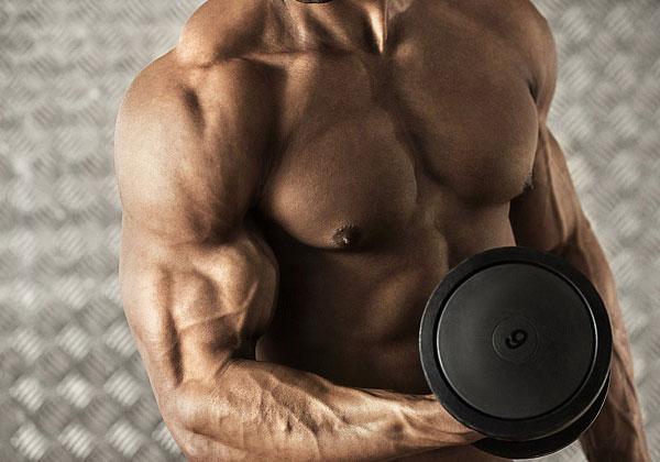 pompe le biceps