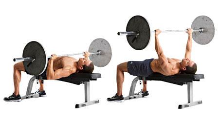 formation des muscles pectoraux